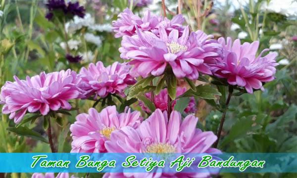 taman bunga setiya aji Wisata bandungan