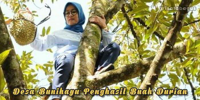 Desa Bunihayu sebagai penghasil durian