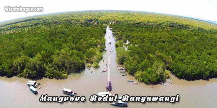 Mangrove Bedul Banyuwangi