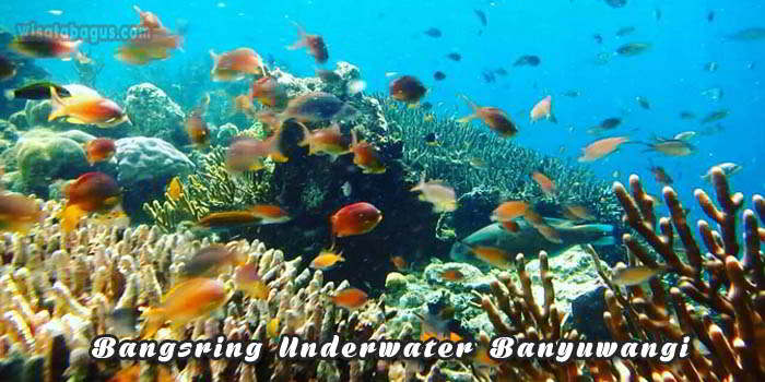 Tempat Wisata Brangsring Underwater Banyuwangi
