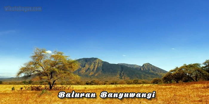 Tempat wisata Baluran Banyuwangi