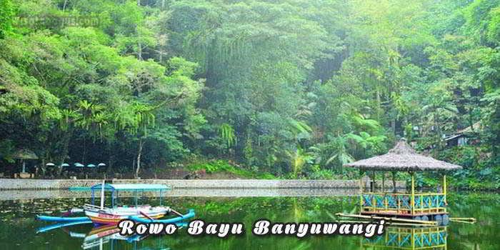 Tempat wisata Rowo Bayu Banyuwangi