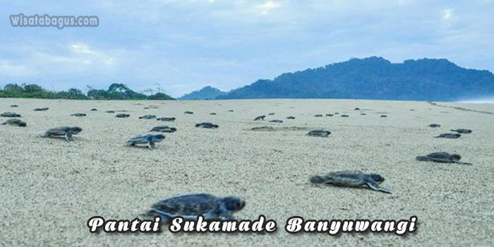 tempat wisata Pantai Sukamade Banyuwangi