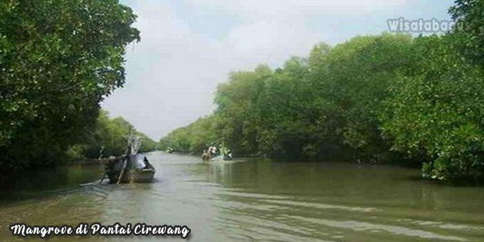 Mangrove-Wisata-Pantai-Cirewang