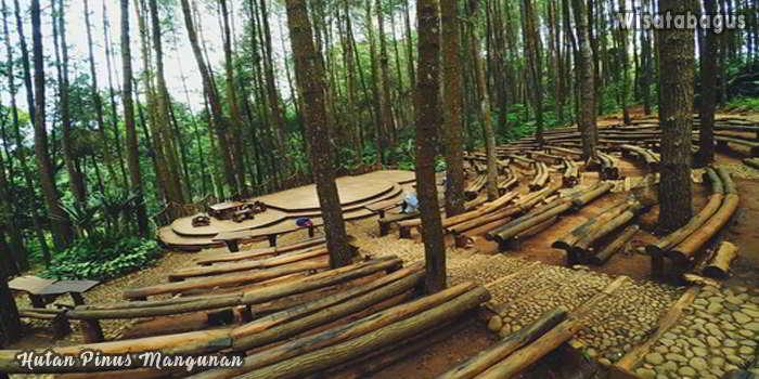 Wisata-di-Hutan-Pinus-Mangunan-Jogja