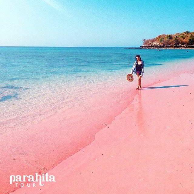 wisata-pantai-di-lombok-pantai-pink