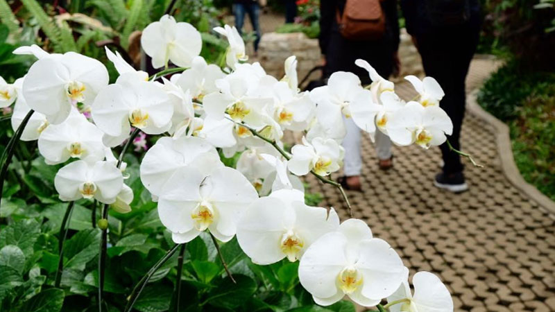 orchid-forest-cikole-penginapan