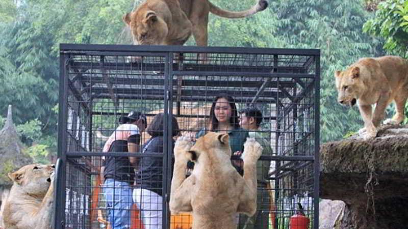 taman-safari-bogor-2019