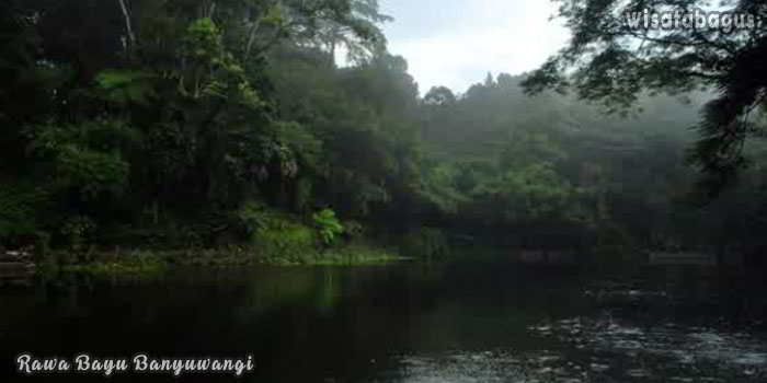 Wisata-Rawa-Bayu-Banyuwangi