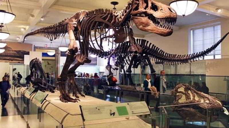 kebun-raya-bogor-museum-zoologi