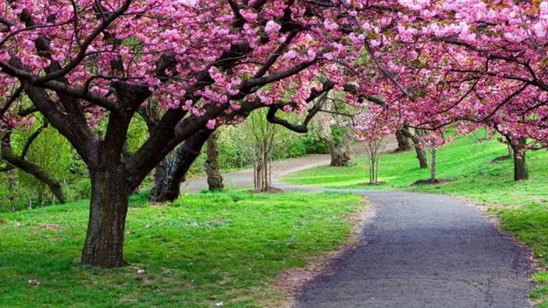 tempat-wisata-di-bogor-taman-sakura
