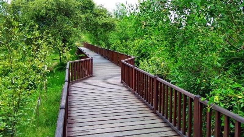 tempat-wisata-di-surabaya-hutan-mangrove-wonorejo