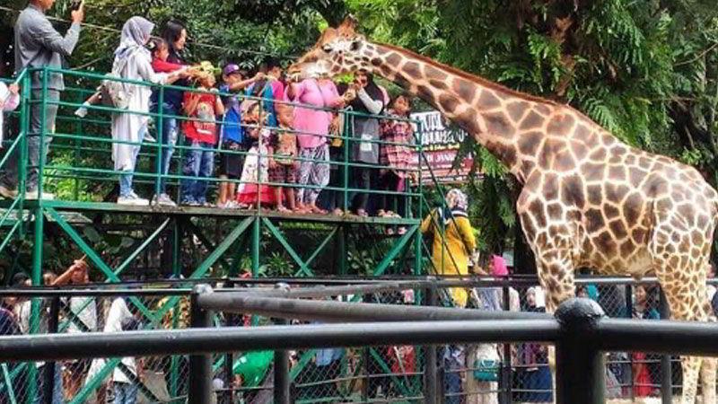 tempat-wisata-di-surabaya-kebun-binatang