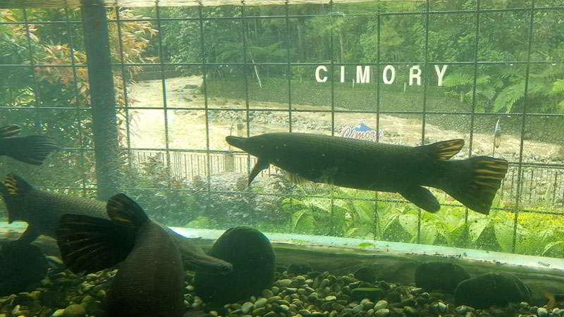 cimory-riverside-aquarium