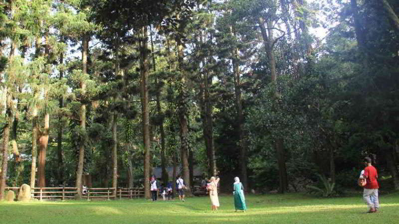 cimory-riverside-forest