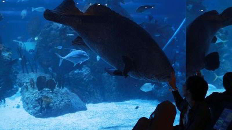 jakarta-aquarium-atraksi-feeding-time