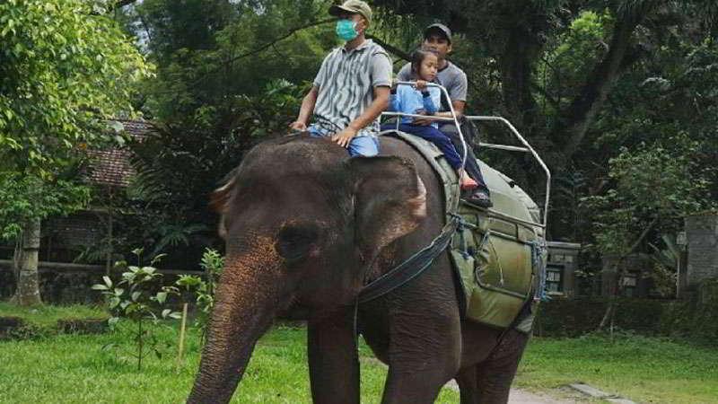 kebun-binatang-gembira-loka-naik-gajah