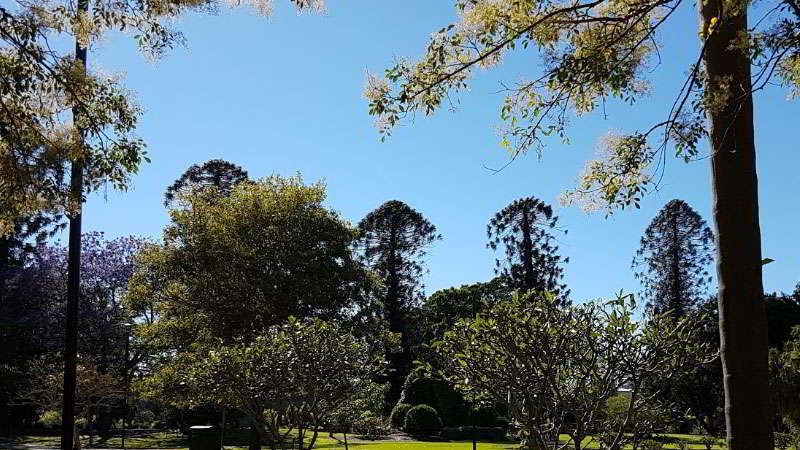 kebun-raya-cibodas-Auracarua-Avenue