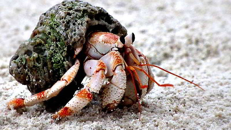 wahana-hermit-crab-wooden-log-jakarta-aquarium