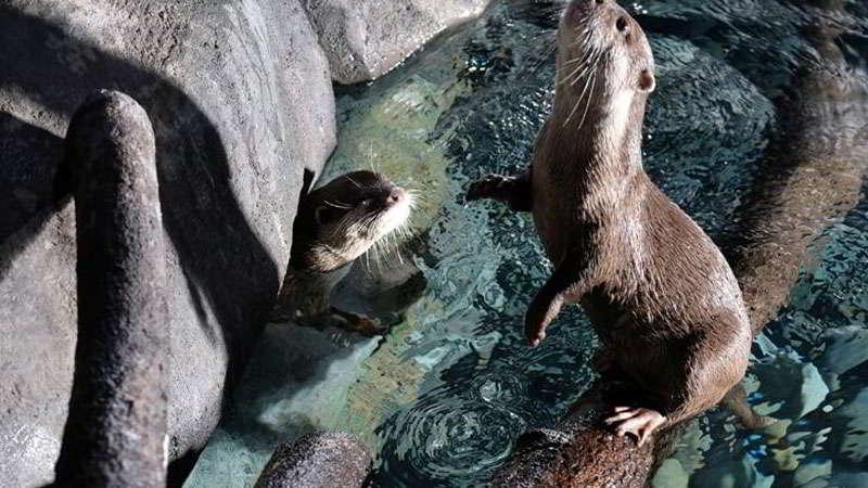 wahana-otter-tunnel-jakarta-aquarium