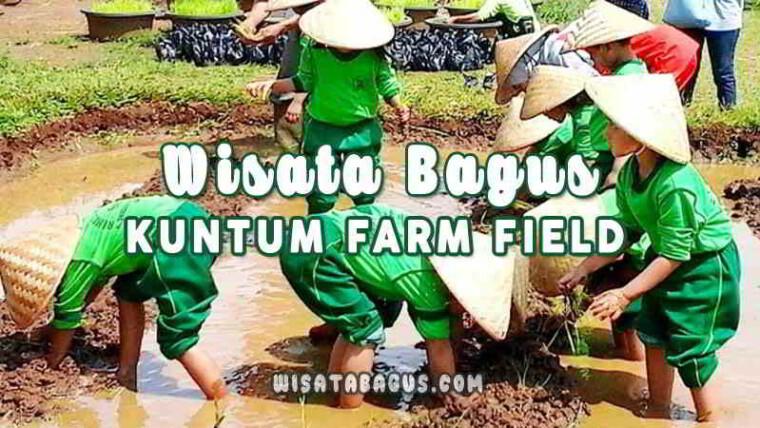 kuntum-farm-field