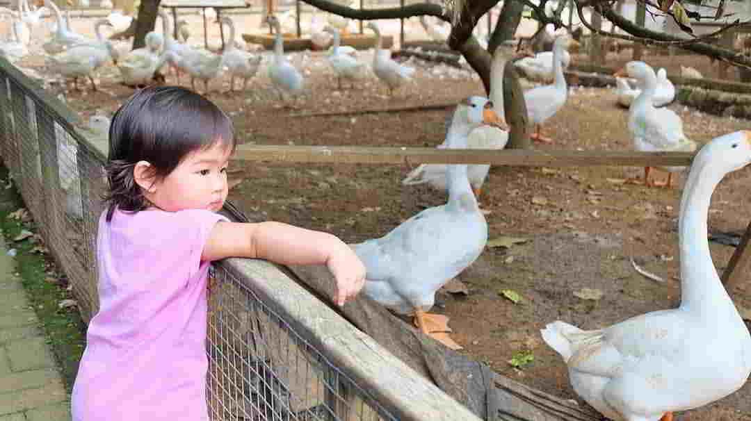 kuntum-farm-field-tajur-bogor