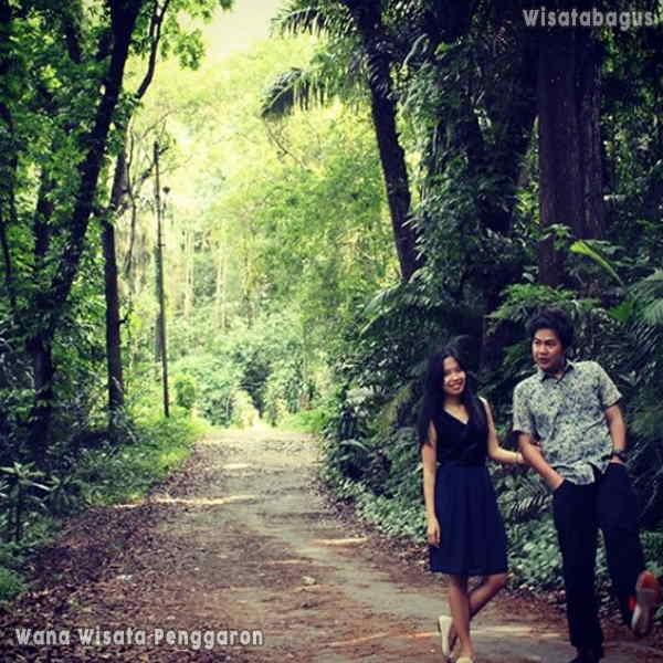 Hutan-Wisata-Penggaron-Ungaran