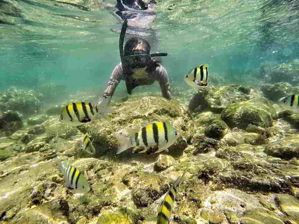 pantai-nglambor-snorkeling