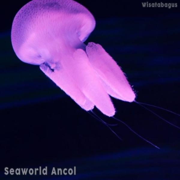 promo-seaworld-ancol