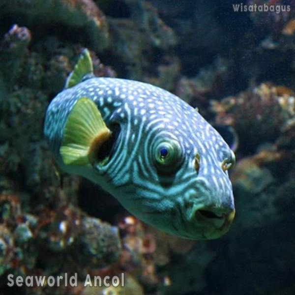 seaworld-ancol-instagram