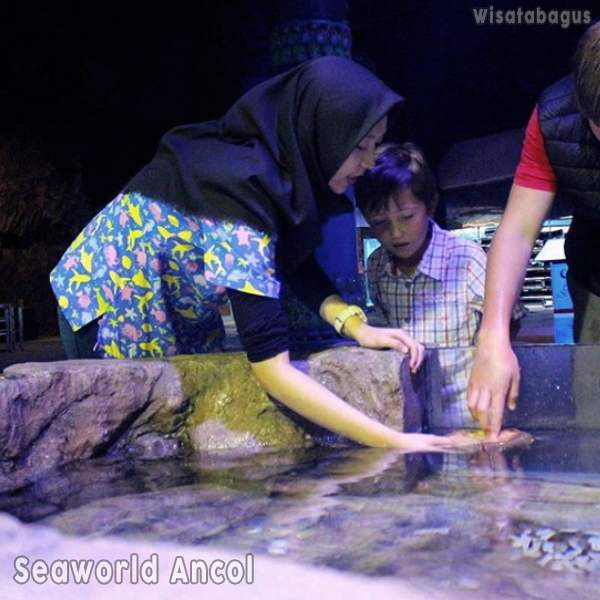 touch-pool-seaworld-ancol