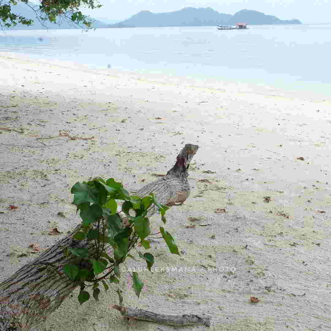 pulau-pahawang-open-trip
