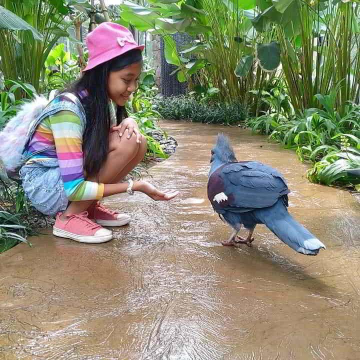 bali-bird-park-enrance-fee