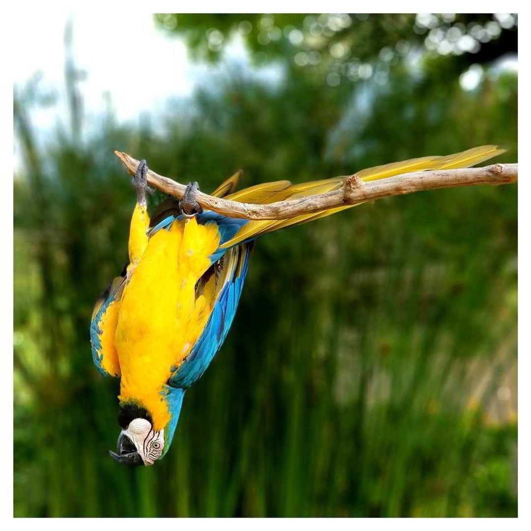 bali-bird-park-ticket-price