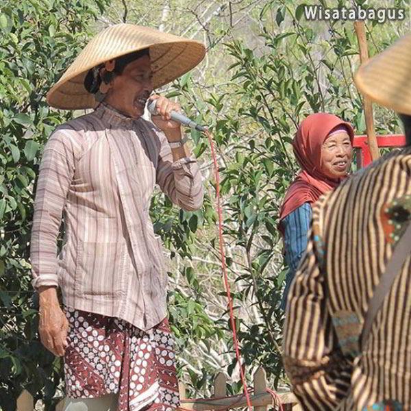 buah-apa-saja-yang-ada-di-kebun-buah-mangunan