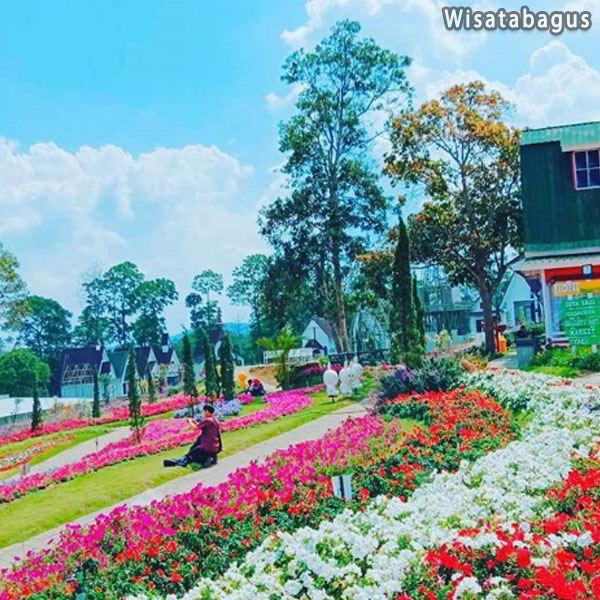 celosia-flower-garden