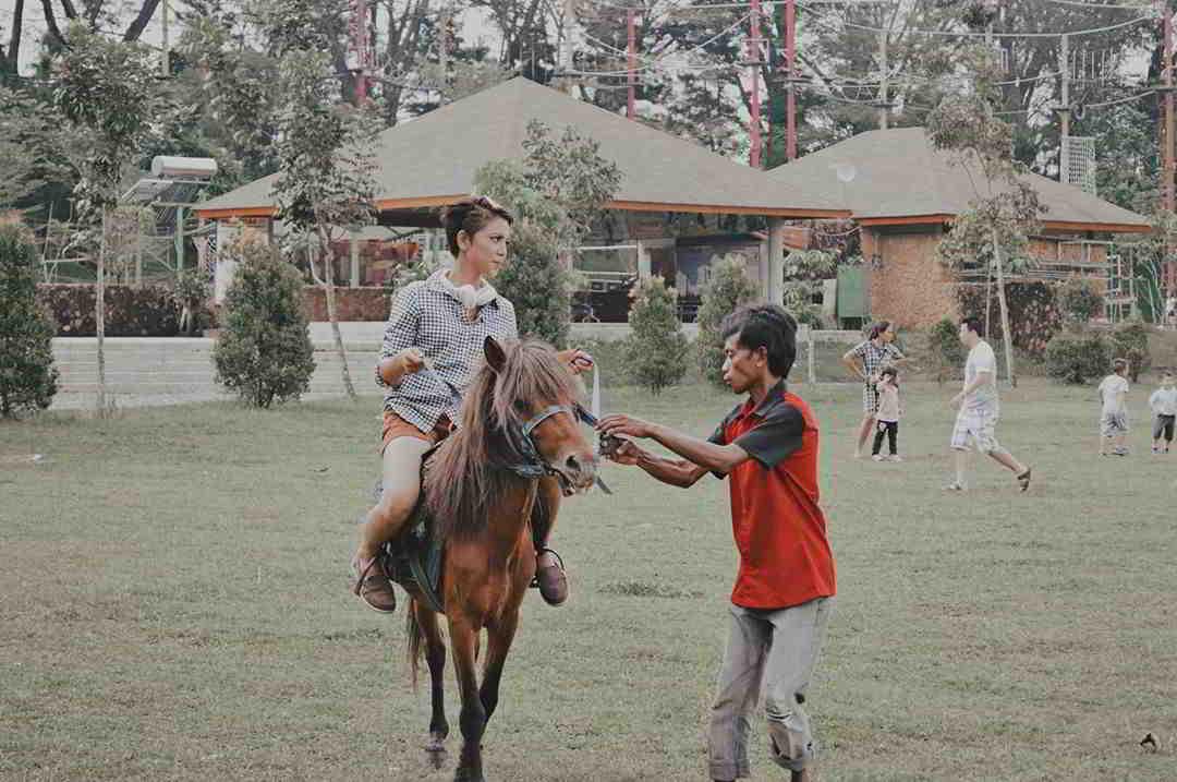kuda-poni-taman-budaya-sentul