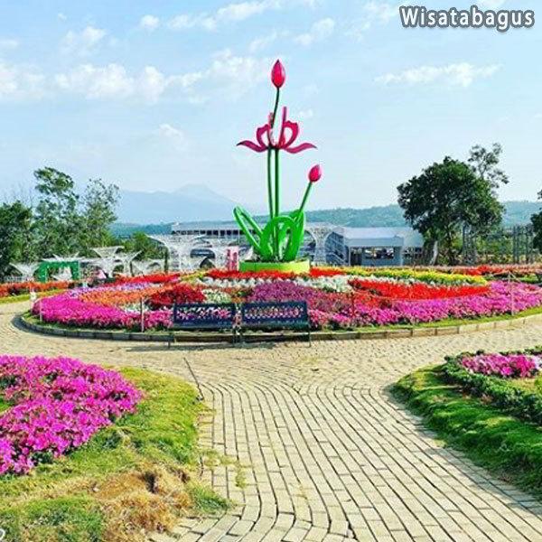 spot-taman-bunga-celosia-flower-garden