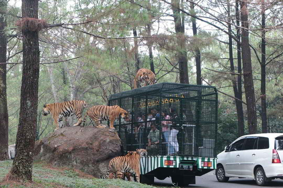 taman-safari-prigen-malang