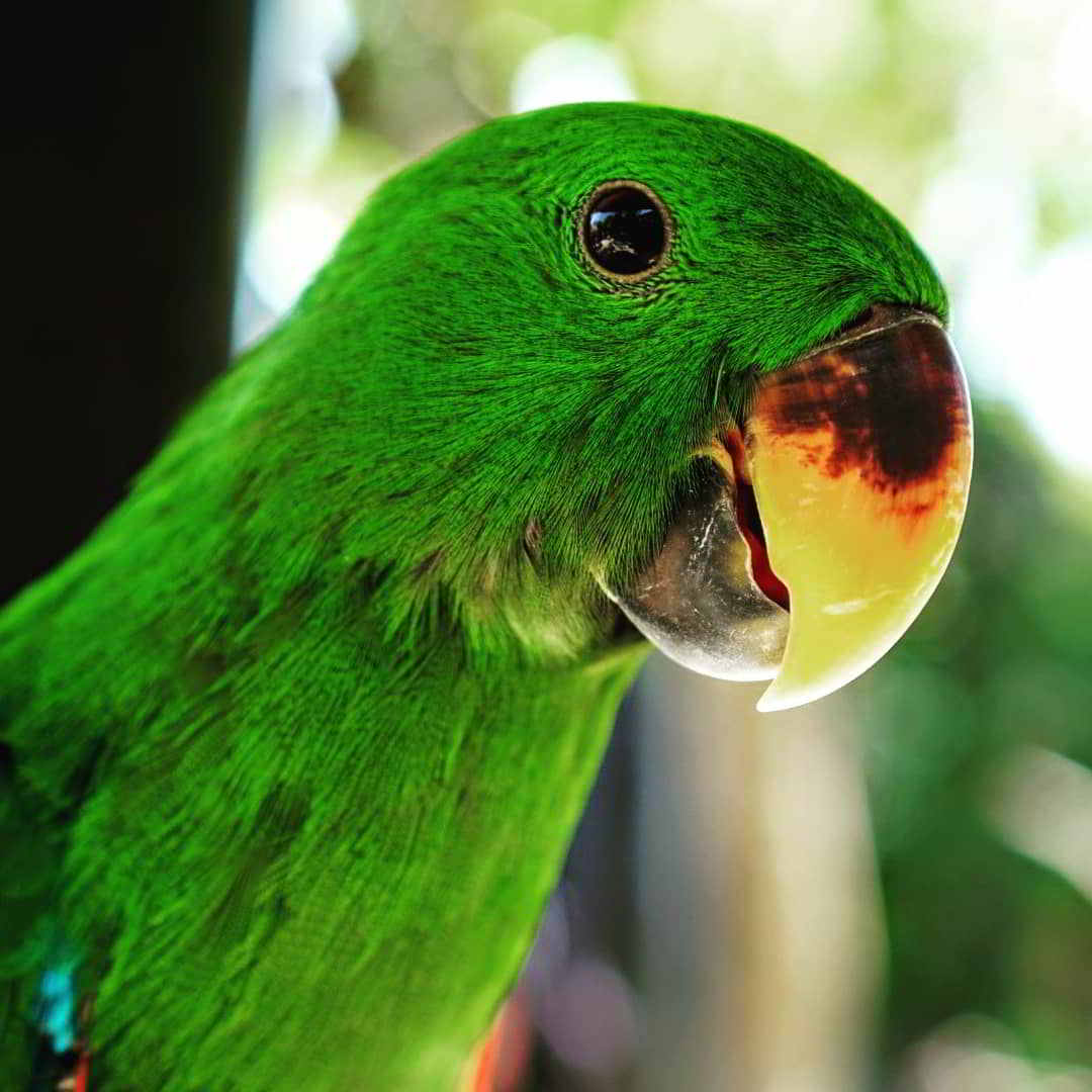 tiket-murah-bali-bird-park