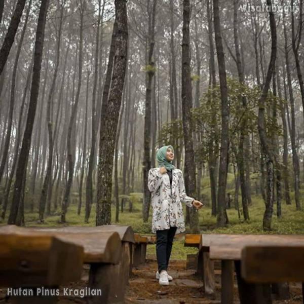 hutan-pinus-kragilan-semarang