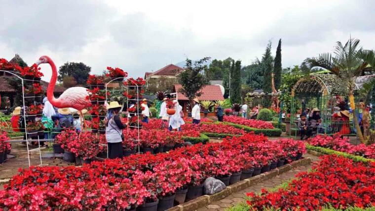 Taman Bunga Begonia Bandung