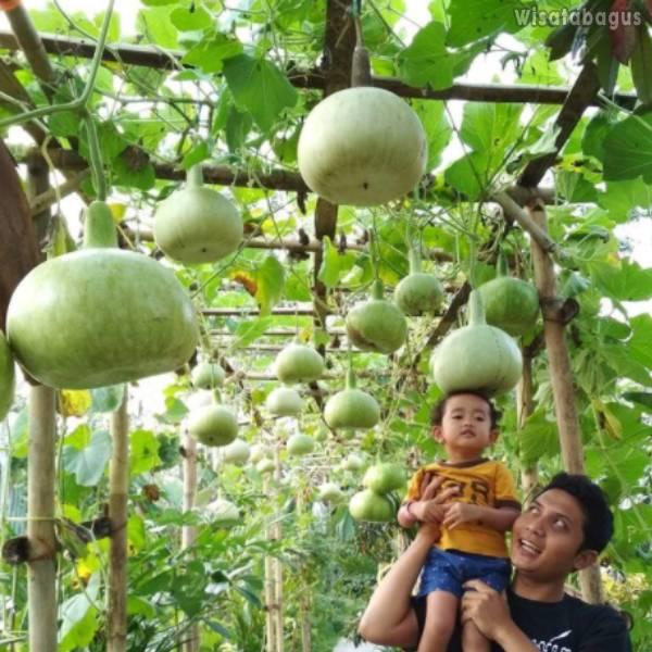 Kampung Flory Yogyakarta