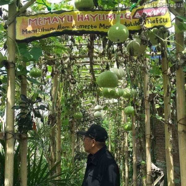 Wisata Petik Buah Kampung Flory